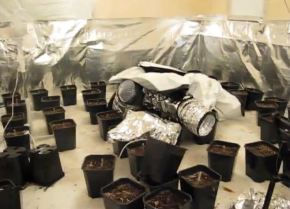 Cannabis Factory in Hedon rented house