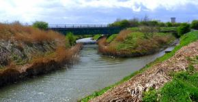 Protect our Waterways appeal after dead fish incidents!