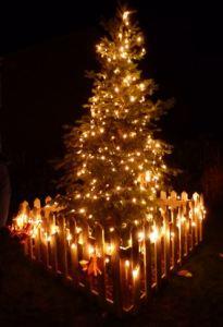 Burstwick Christmas Tree