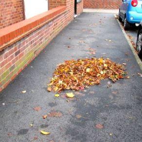 Leaves wind-shaped 3