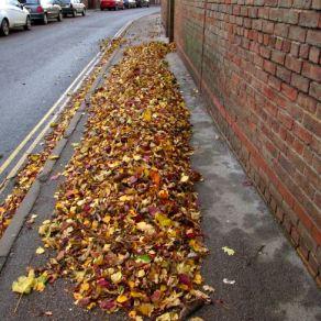 Leaves wind-shaped 4