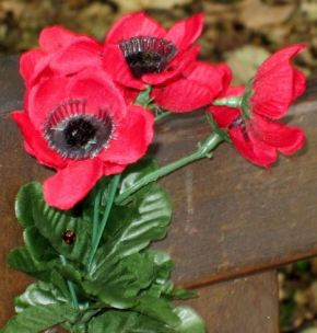 Hedon and District Royal British Legion – Poppy Appeal