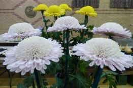More anemones
