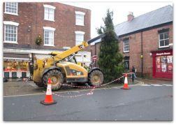 Christmas Tree 2014 b
