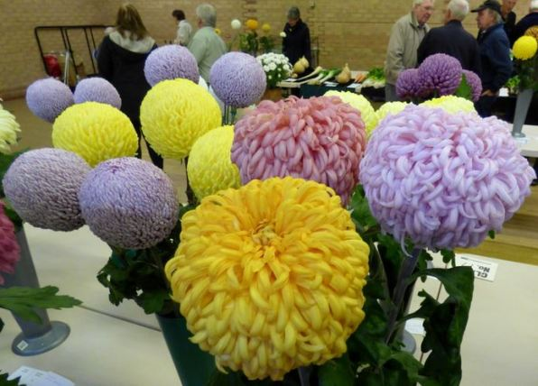 Chrysanthemum Show 2014