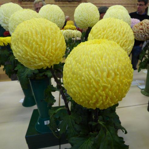 P Everingham 3 vases 3 blooms - Photo: Linda Hinchcliffe