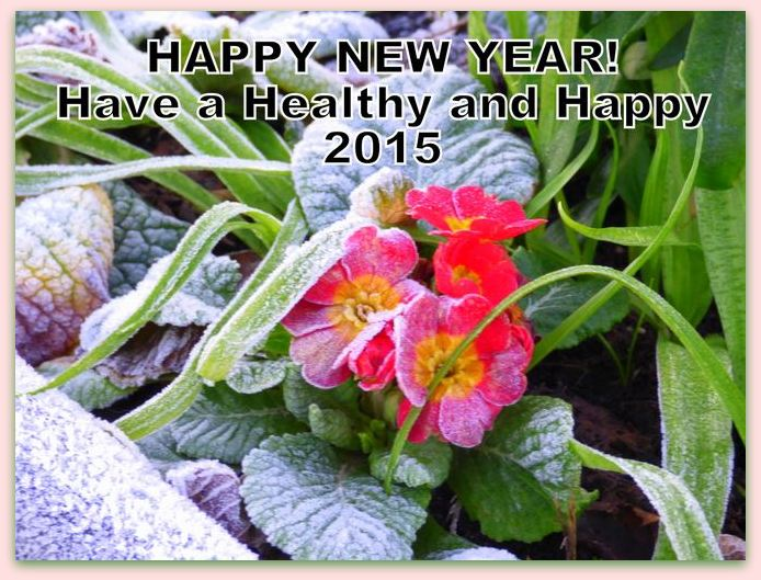 Happy New Year photo 2015