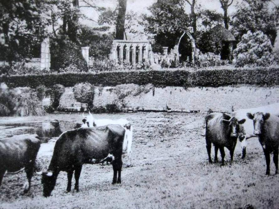 cows and horsewell