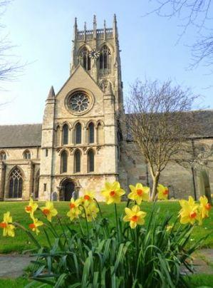 Daffodils worship church
