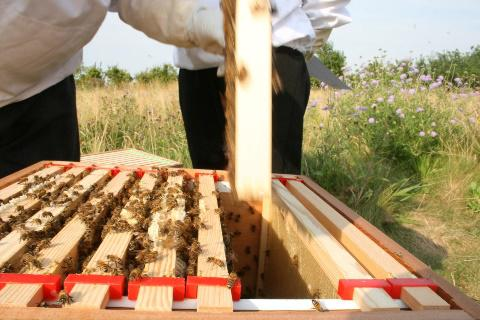 Working on the hives - courtesy of Beeloved