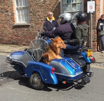 Biker Dog - Jenny
