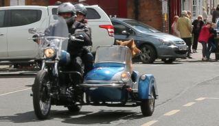Dog sidecar cu