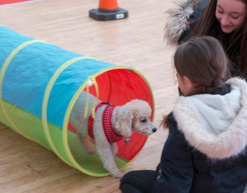 Dog through tunnel