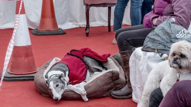 Dog tired observer