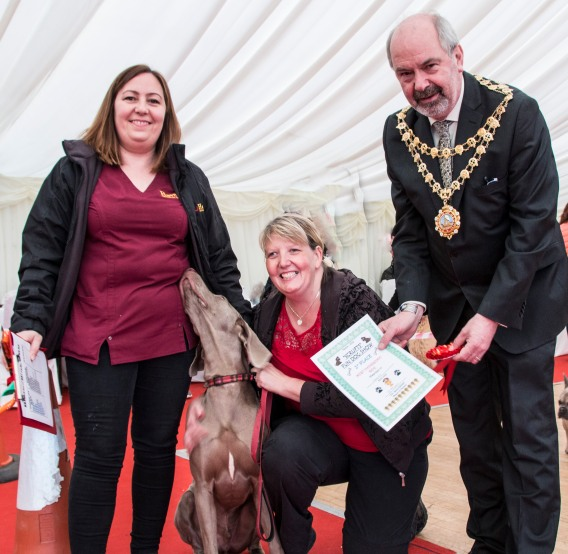 Helen Hedges and Harley the weimaraner with judges