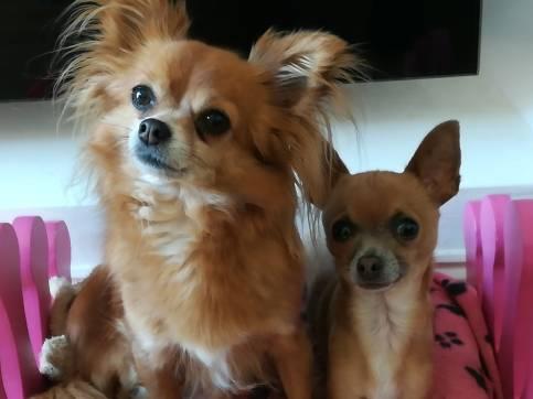 Lola and Bella