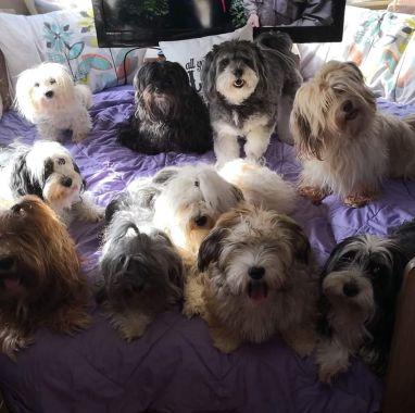 Shaggy dog story family