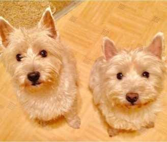 Tilly and Daisy